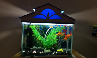 Best Aquarium Starter Kits