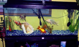 Best Fish Tank Filter