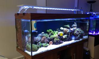 Best LED Aquarium Lighting