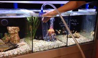 Best Aquarium Gravel Vacuum
