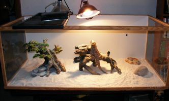 Best Lights for Bearded Dragons & Leopard Geckos