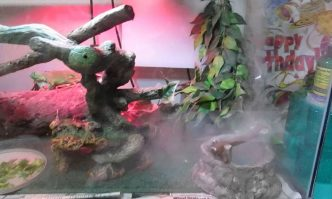 Best Reptile Humidifiers