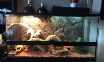 Best Tanks for Bearded Dragons