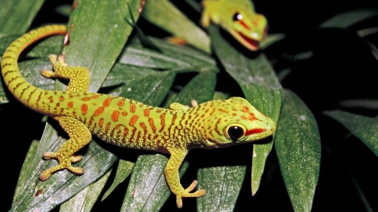 The 19 Crested Gecko Behaviors Backs You Should Know 2019