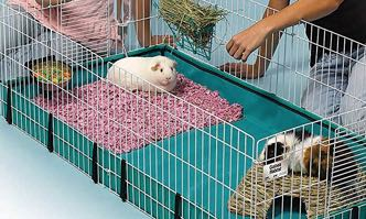The 10 Best Bedding For Guinea Pigs Bedding Ideas And Options 2020 Timeline Pets