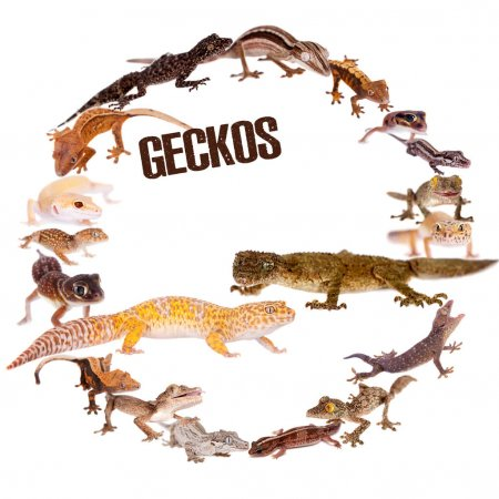 Crested Gecko Accessories