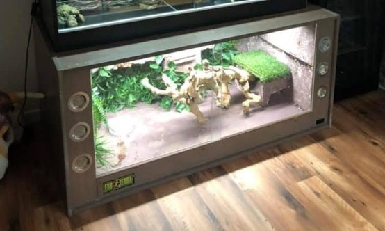 Setting Up Crested Gecko Habitat Best Choice Review 2020 Timeline Pets,Basil Pesto Sauce Recipe
