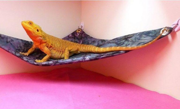 Bearded dragon hammock The avengers
