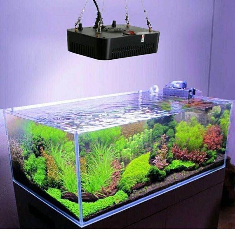 Best LED Lighting for Reef Tank 2020: Are Your Corals ...