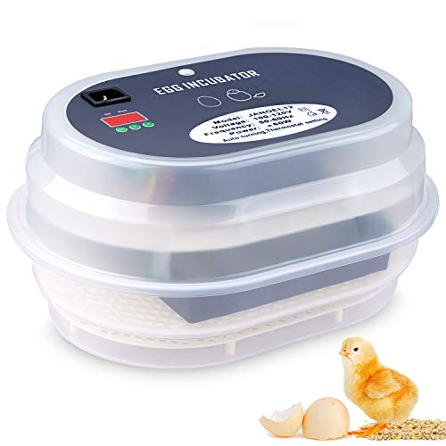 The 5 Best Automatic Egg Incubator 2020 - Chicken, Duck & Quail Hatching Reviews