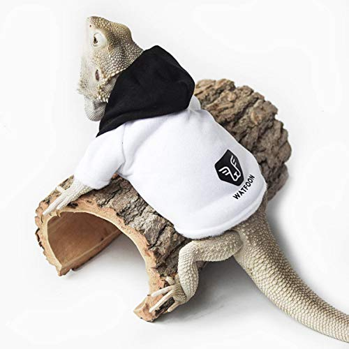 What Are The Best Bearded Dragon Accessories: Which all owners should have?