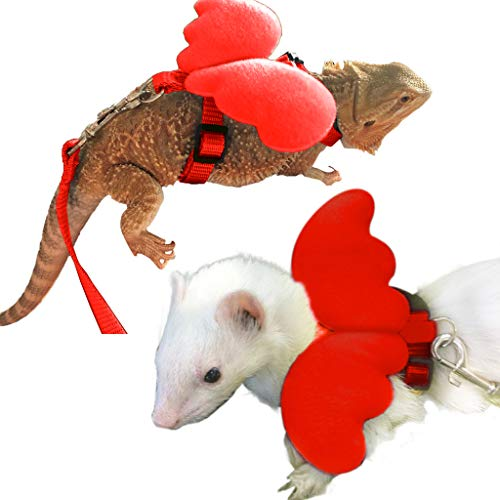 The 9 Best Bearded Dragon/ Crested Gecko Leashes & Harnesses 2020