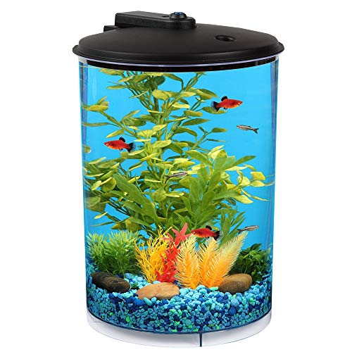 The 12 Best Betta Fish Tanks Reviews & Guide 2020