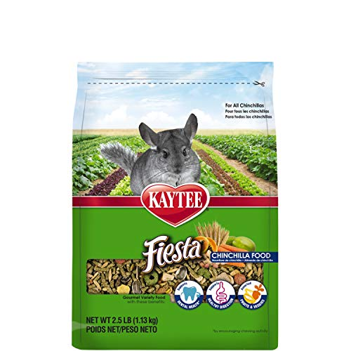 Top 15 Best Chinchilla Treats: What Are Good Treats for Chinchillas?