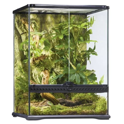 Best Crested Gecko Tank: Top Choice and Guide 2020
