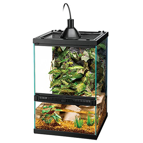 Best Crested Gecko Terrarium: Top Choices and Guide 2020