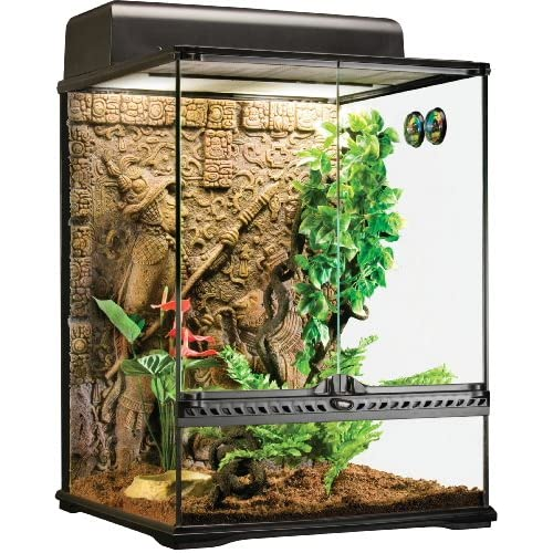 Setting up Crested Gecko Habitat: Best Choice Review 2020