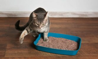 Best Non-Tracking Cat Litter